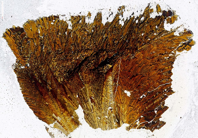 orpiment(andy)(1).jpg